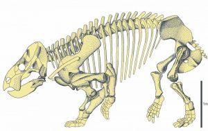 لیسوویسیا بویانی بزرگترین پستاندار دوره تریاس